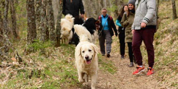 excursiones con perro